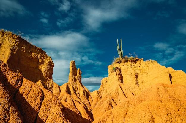 Low angle shot von wildpflanzen, die in der tatacoa-wüste kolumbien unter einem blauen himmel wachsen