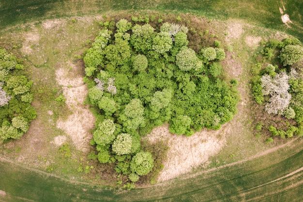 Luftansicht des grünen feldes von oben nach unten mit baumkronen in der mitte.
