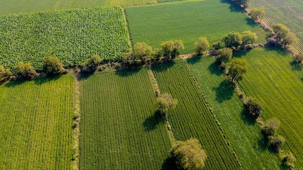 Luftansicht des landwirtschaftsfeldes