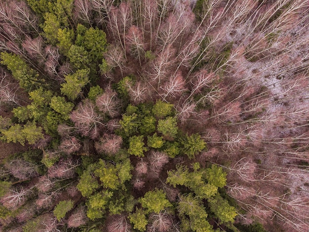 Luftansicht von winterbäumen im mischwald. drohnenfotografie