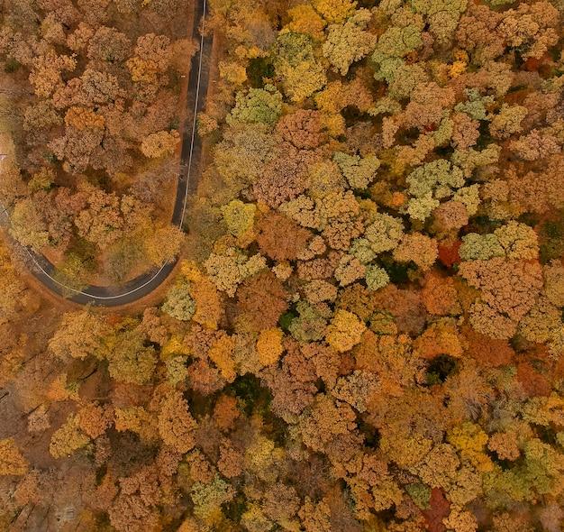 Luftaufnahme an der straße im schönen herbstwald