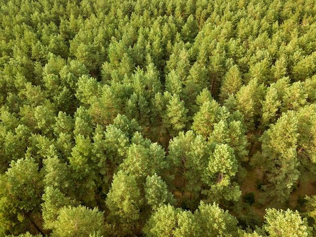 Luftaufnahme der drohnengrünbäume am sommertag. natürlicher sommerhintergrund