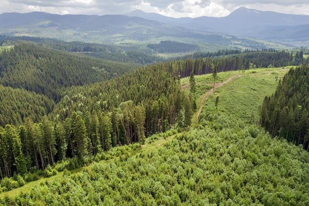 Luftaufnahme der grünen karpatenberge bedeckt mit immergrünem fichtenkiefernwald an einem sonnigen sommertag.