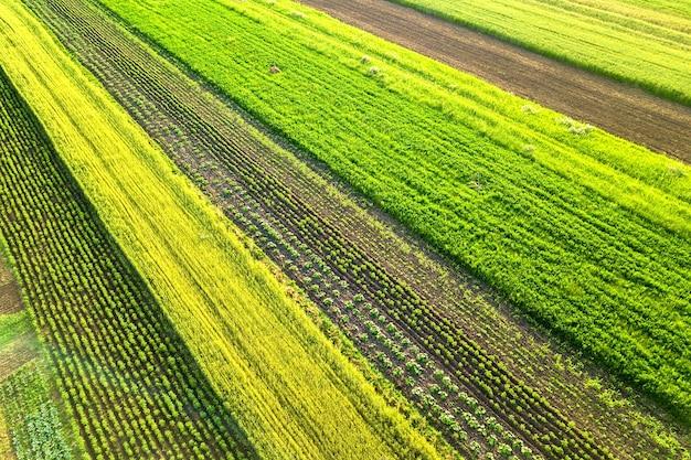 Luftaufnahme der grünen landwirtschaftlichen felder im frühjahr mit frischer vegetation nach der aussaat an einem warmen sonnigen tag.
