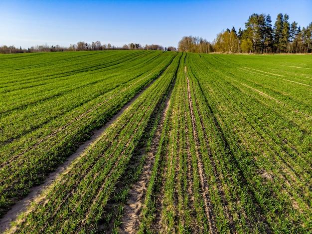 Luftaufnahme der grünen landwirtschaftlichen felder im frühjahr mit frischer vegetation