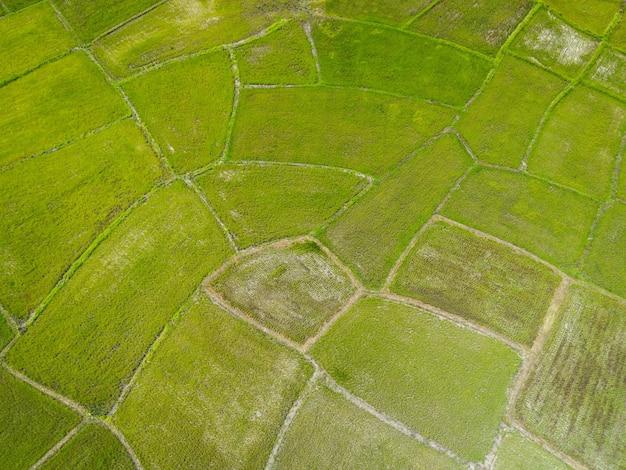 Luftaufnahme der grünen reisfelder natur landwirtschaftlicher bauernhof hintergrund, draufsicht reisfeld von oben mit landwirtschaftlichen parzellen von verschiedenen pflanzen in grün, vogelperspektive