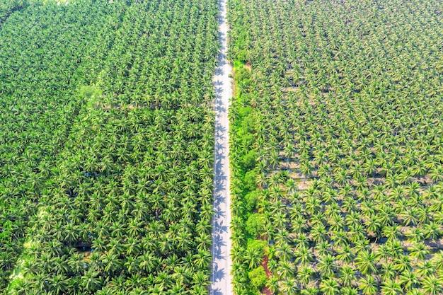 Luftaufnahme der kokospalmenplantage und der straße.