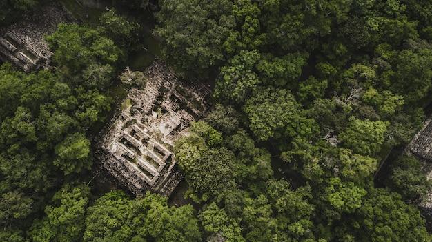 Luftaufnahme der pyramide, calakmul, campeche, mexiko. ruinen der alten maya-stadt calakmul, umgeben vom dschungel