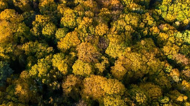 Luftaufnahme der schönen waldlandschaft mit gelben bäumen von oben