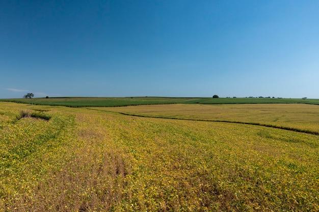 Luftaufnahme der sojaplantage am sonnigen tag in brasilien.