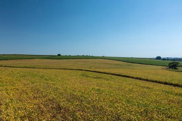 Luftaufnahme der sojaplantage am sonnigen tag in brasilien