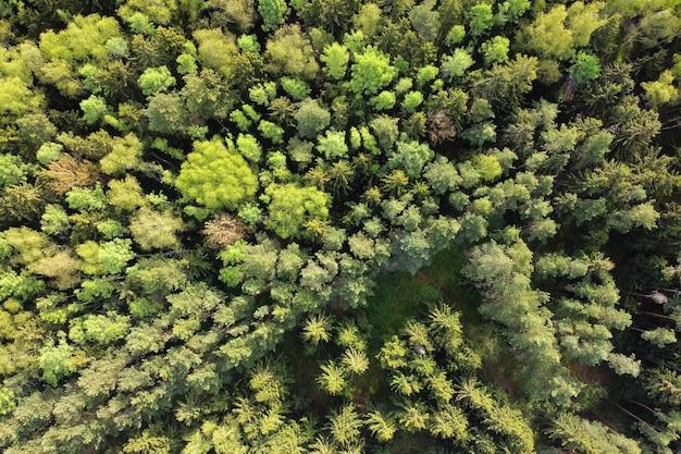 Luftaufnahme der sommerwaldlandschaft, der grünen bäume, draufsicht