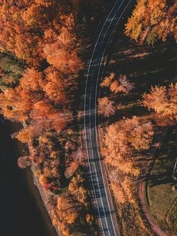 Luftaufnahme der straße im schönen herbstwald. schöne landschaft mit leerer landstraße, bäumen mit den rot- und orangenblättern. autobahn durch den park. blick vom fliegenden drohne. russland, st. petersburg