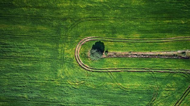 Luftaufnahme des gemüsefeldes vom brummen