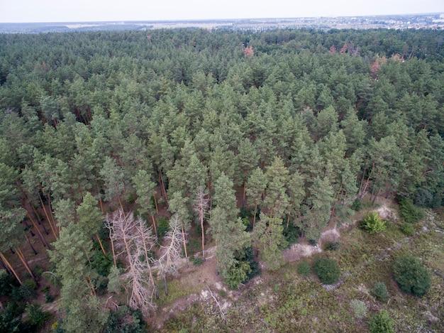 Luftaufnahme des grünen waldes