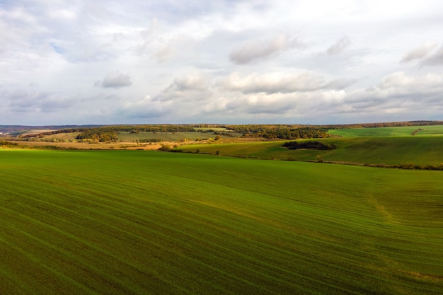Luftaufnahme des hellgrünen landwirtschaftlichen feldes im zeitigen frühjahr.