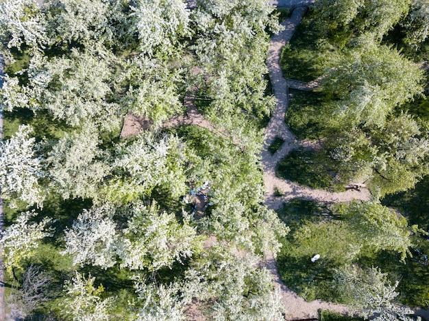 Luftaufnahme des parks mit wandergassen im frühjahr. die bäume blühen an einem sonnigen tag. kiev, ukraine. foto von der drohne