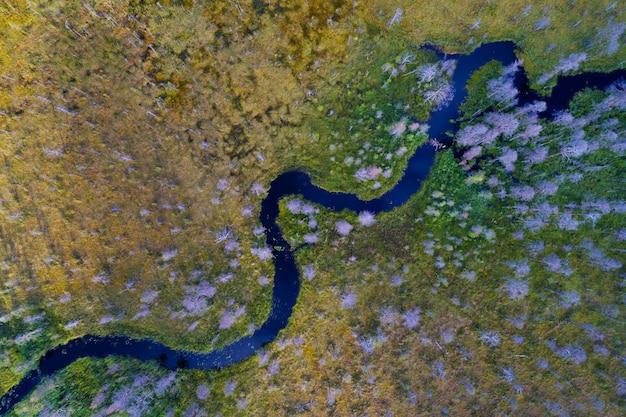 Luftaufnahme des waldflusses, der durch sumpfland läuft