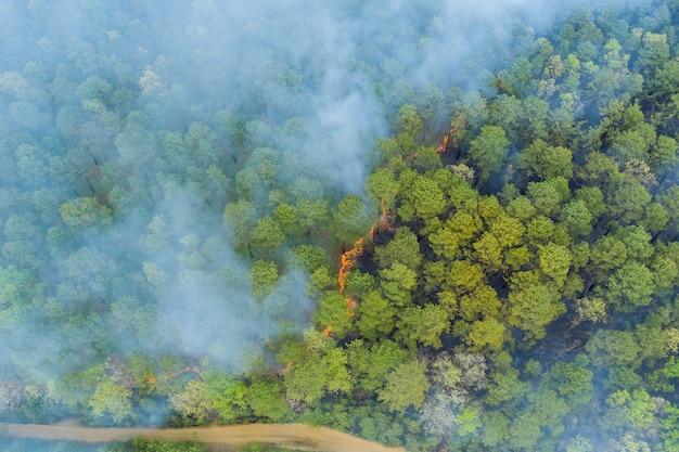 Luftaufnahme ein rauch, der von einem verbrannten baum auf feuer im wald kommt