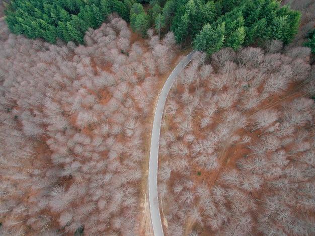Luftaufnahme einer leeren straße im wald