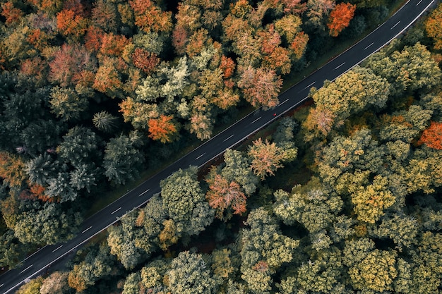 Luftaufnahme einer straße, die von bäumen in einem wald umgeben ist