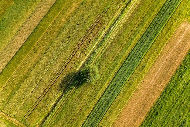 Luftaufnahme eines einzelnen baumes, der einsam auf grünen landwirtschaftlichen feldern im frühjahr mit frischer vegetation nach der aussaatzeit an einem warmen sonnigen tag wächst.