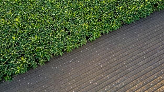 Luftaufnahme eines gepflügten feldes, das zur aussaat und zum grünen bananenfeld bereit ist