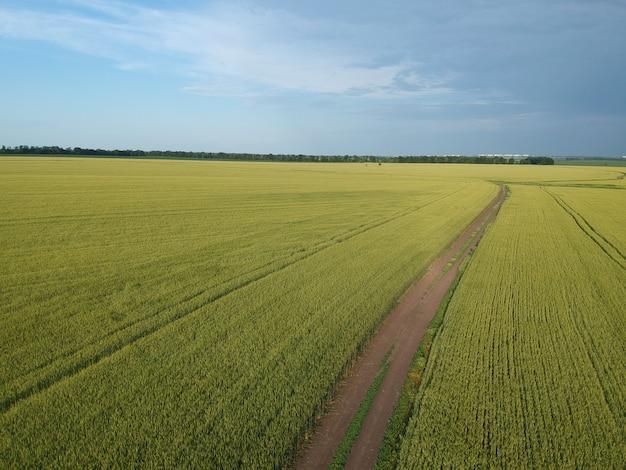 Luftaufnahme eines grünen ländlichen gebiets mit straße
