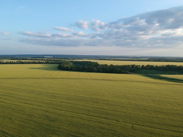 Luftaufnahme eines grünen ländlichen gebiets mit weizenfeldern