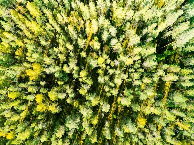 Luftaufnahme eines grünen waldes. luftbäume. luft draufsicht wald. waldblick von oben.