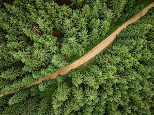Luftaufnahme eines nadelwaldes, durch den eine schotterstraße in den bergen führt