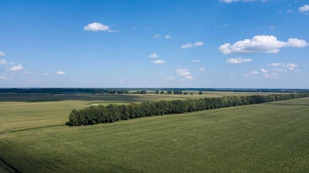 Luftaufnahme eines schönen sonnenuntergangs über grünen maisfeldern - landwirtschaftliche felder