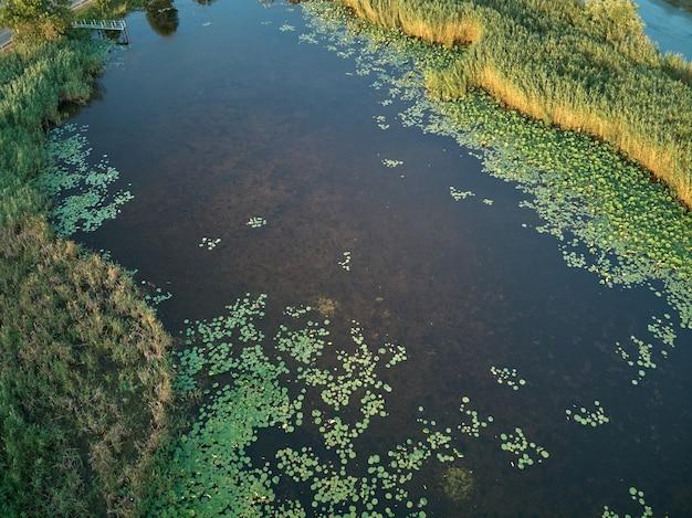 Luftaufnahme über dem teich mit einem wachsenden lotus
