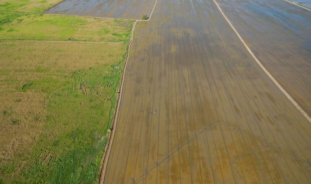 Luftaufnahme vom fliegenbrummen des feldreises mit landschaftsgrünmuster-naturhintergrund, draufsichtfeldreis