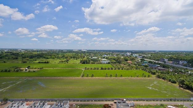 Luftaufnahme vom fliegenbrummen des feldreises mit landschaftsgrünmuster-naturhintergrund