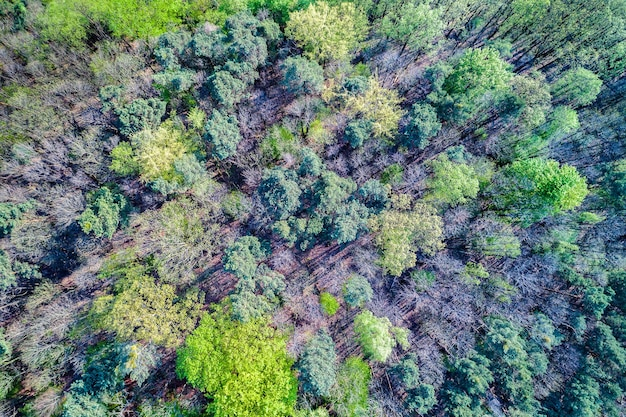 Luftaufnahme von bäumen im pfälzer wald. rheinland-pfalz deutschland
