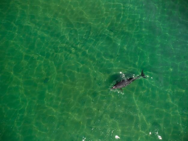 Luftaufnahme von delfinschoten, die im meer schwimmen?