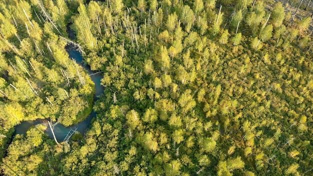 Luftaufnahme von der drohne der jungen bäume. kleiner fluss. naturlandschaft.
