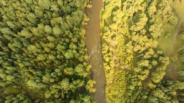 Luftaufnahme von der drohne des gebirgsflusses und des waldes. draufsicht auf bäche und bäume. naturlandschaft am sonnigen tag. vogelperspektive.