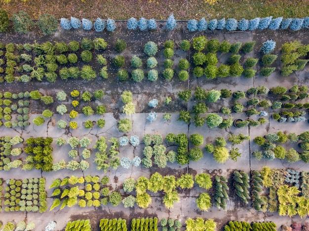 Luftaufnahme von drohne über grünem gartencenter mit verschiedenen pflanzen, bäumen und büschen. draufsicht.
