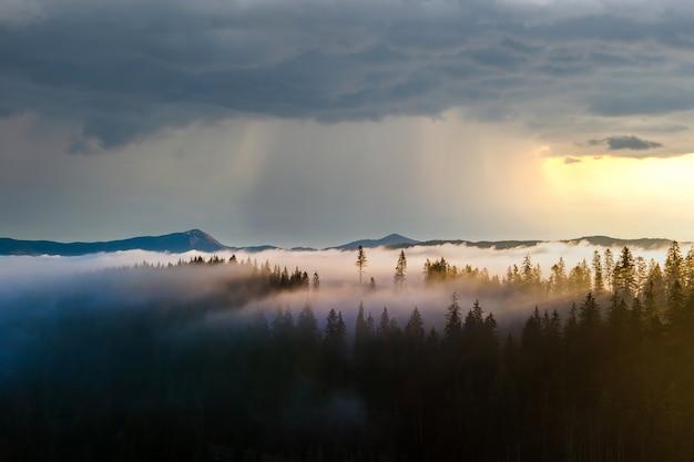 Luftaufnahme von dunkelgrünen kiefern im fichtenwald mit sonnenaufgangsstrahlen, die durch zweige in nebligen herbstbergen leuchten.