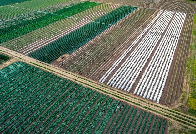 Luftaufnahme von gewächshaus- und gemüsefeldern in kleinem landwirtschaftlichen bereich. landwirtschaftliches feld von oben.