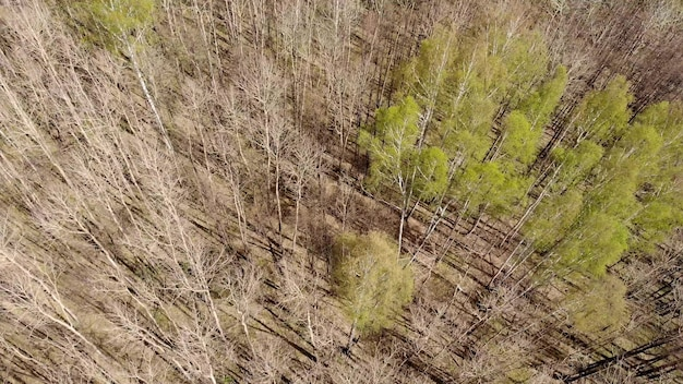 Luftaufnahme von laubbäumen ohne laub blätter in der landschaft im zeitigen frühjahr. flache ansicht von oben aus hoher haltung. natürlicher hintergrund hintergrund der europäischen wälder und ihrer schatten. drohnenansicht.