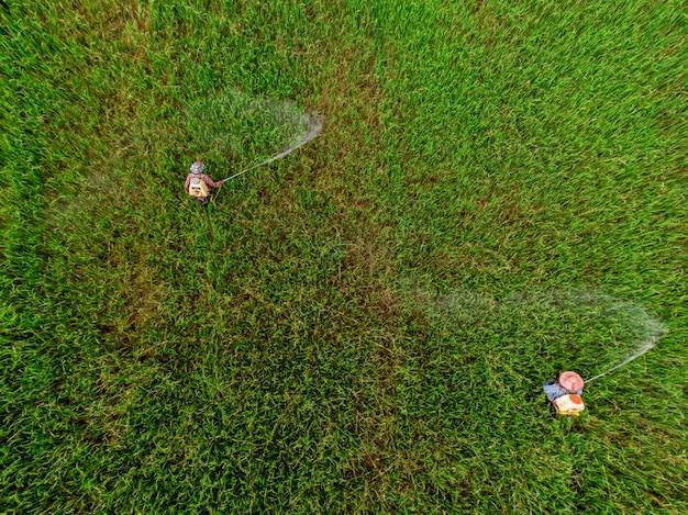 Luftaufnahme von menschen, die pestizide auf reissaatfeld sprühen