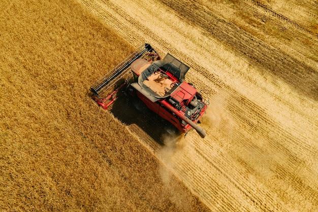 Luftaufnahme von oben auf die getreideerntemaschine, die im sommer weizenernte sammelt, erntet...