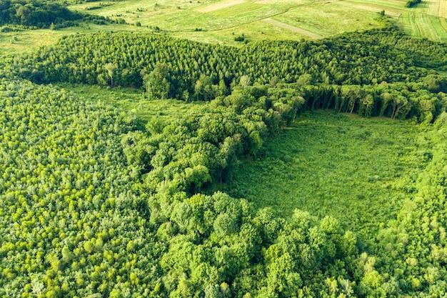 Luftaufnahme von oben nach unten des grünen sommerwaldes mit großer fläche von abgeholzten bäumen als ergebnis der globalen entwaldungsindustrie. schädlicher menschlicher einfluss auf die weltökologie.