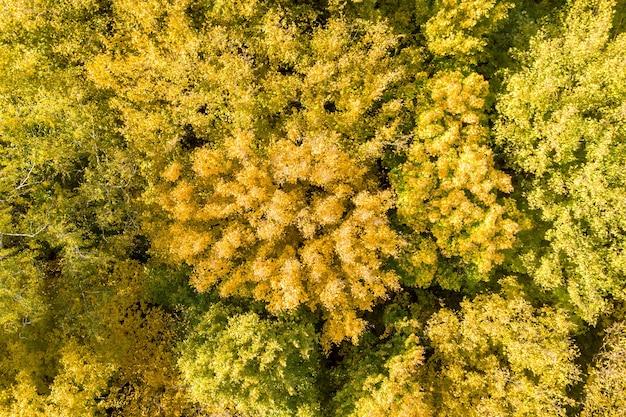 Luftaufnahme von oben nach unten von grünen und gelben überdachungen im herbstwald.