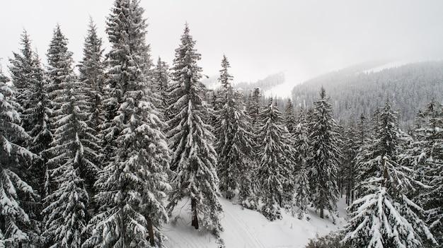 Luftaufnahme von schneebedeckten zweigen von schönen dicken hohen hohen tannen, die in einem wald mit spuren wachsen