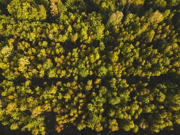 Luftaufnahme von wäldern unter sonnenlicht tagsüber in deutschland - perfekt für natürliche konzepte