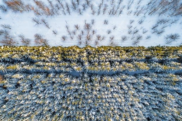 Luftaufnahme von waldplantagen